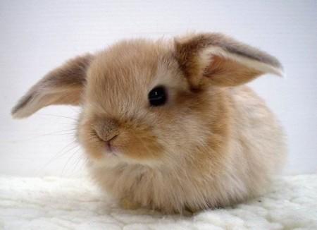 Кролі рослиноїдні тварини