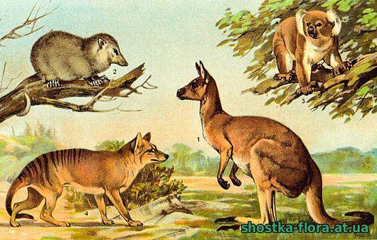 Тваринний світ Австралії