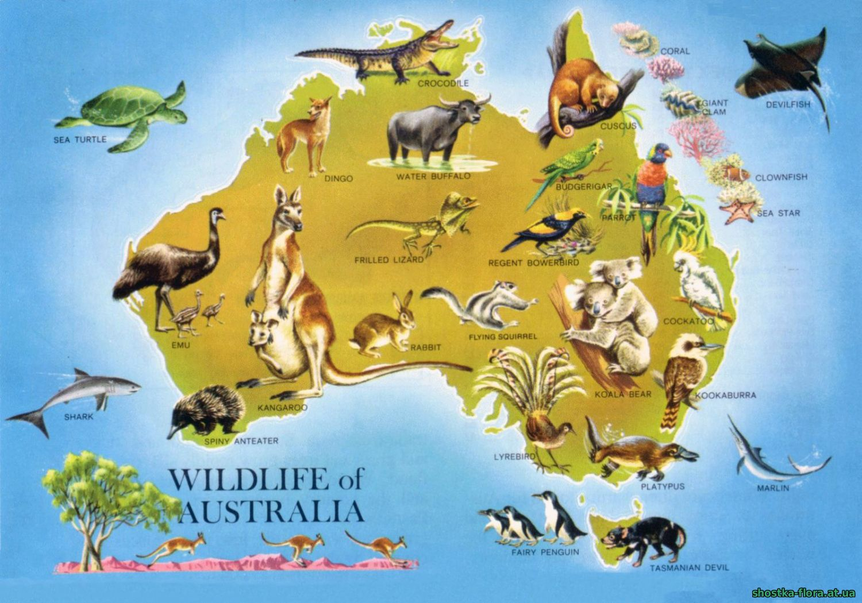 Ендеміки Австралії на карті